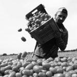Classi, Generi, Etnie: lavoratore agricolo immigrato